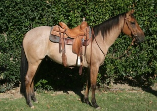 Horses , Rescue - Horse or Pony, Greenleaf , Listing ID 1089, Boise , Idaho, United States,