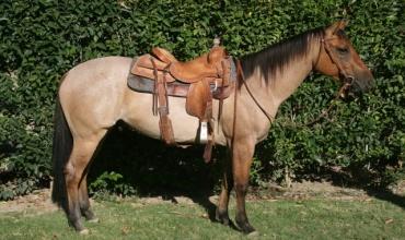Horses , Rescue - Horse or Pony, Greenleaf , Listing ID 1089, Boise , Idaho, United States,