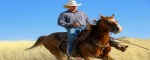 Professionals, Equestrian Professional - All Around Western, Garden City, Listing ID 1090, Midland, Texas, United States,