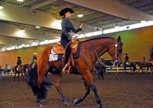 Professionals, Equestrian Professional - High Perfromance Quarter Horses, Gibbs Road , Listing ID 1091, Alabama, United States,
