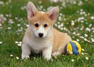 Rescues, Rescue - Dog, Bridge Ct, Listing ID 1039, Camden, North Carolina, United States,