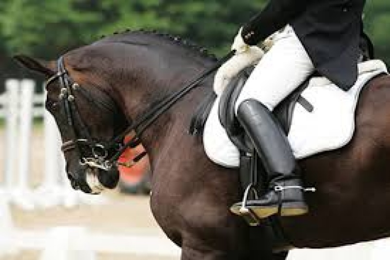 Professionals, Equestrian Professional - High Performance Dressage, Front Street, Listing ID 1040, Millbrook, New York, United States,