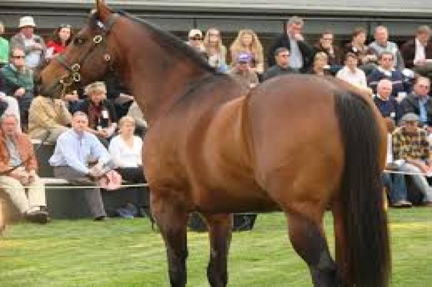 Horses , Horse - High Performance Quarter Horse, sylvan ave, Listing ID 1042, dallas, Texas, United States,