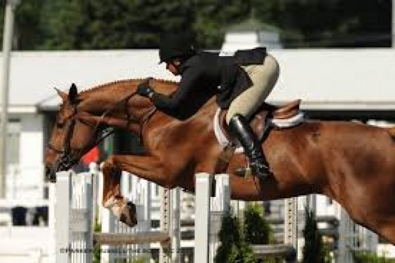 Professionals, Equestrian Professional - High Performance Hunters, Jumpers , baer , Listing ID 1043, Jersey Shore, Pennsylvania, United States,