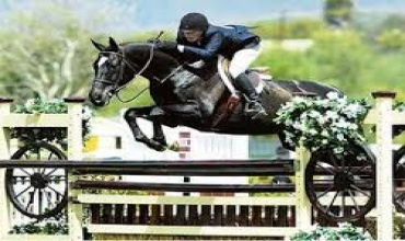 Horses , Horse - High Performance Hunters, Jumper, Cecil Ave, Listing ID 1044, Maryland, United States,
