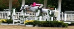 Horses , Horse or Pony - All Around English, Wade Ave, Listing ID 1045, Raleigh, North Carolina, United States,