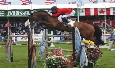 Horses , Horse - High Performance Show Jumpers, 125, Listing ID 1046, ocala, Florida, United States,