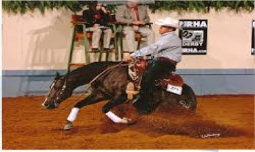 Horses , Horse  - High Performance Reining, Garden City, Listing ID 1049, sterling city, Texas, United States,