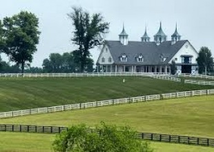 Stables, Stable - High Performance Hunters, Jumpers and Equitation, Overbrook, Listing ID 1050, Lexington, Kentucky, United States,