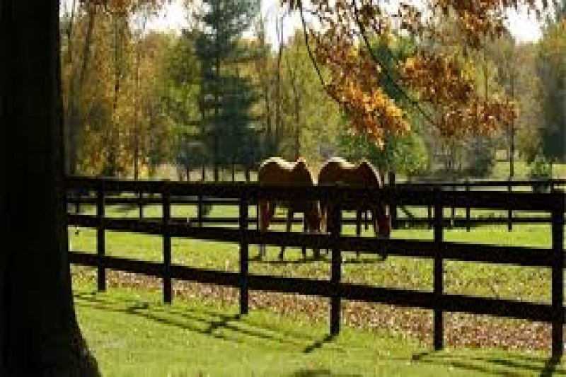 Horses , Stable - All Around Riding, Courtland Place, Listing ID 1052, Bel Air, Maryland, United States,