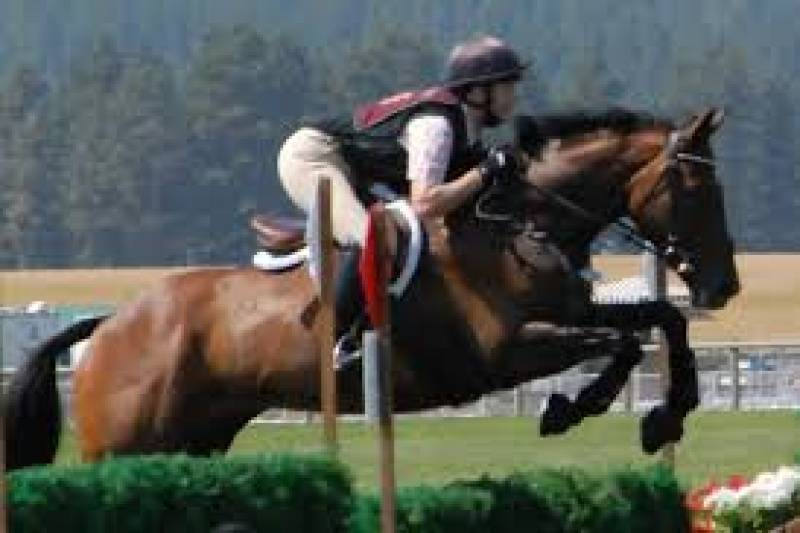 Horses , Horse - High Perfomance Eventing, Rock Church , Listing ID 1059, Fair Hill, Maryland, United States,
